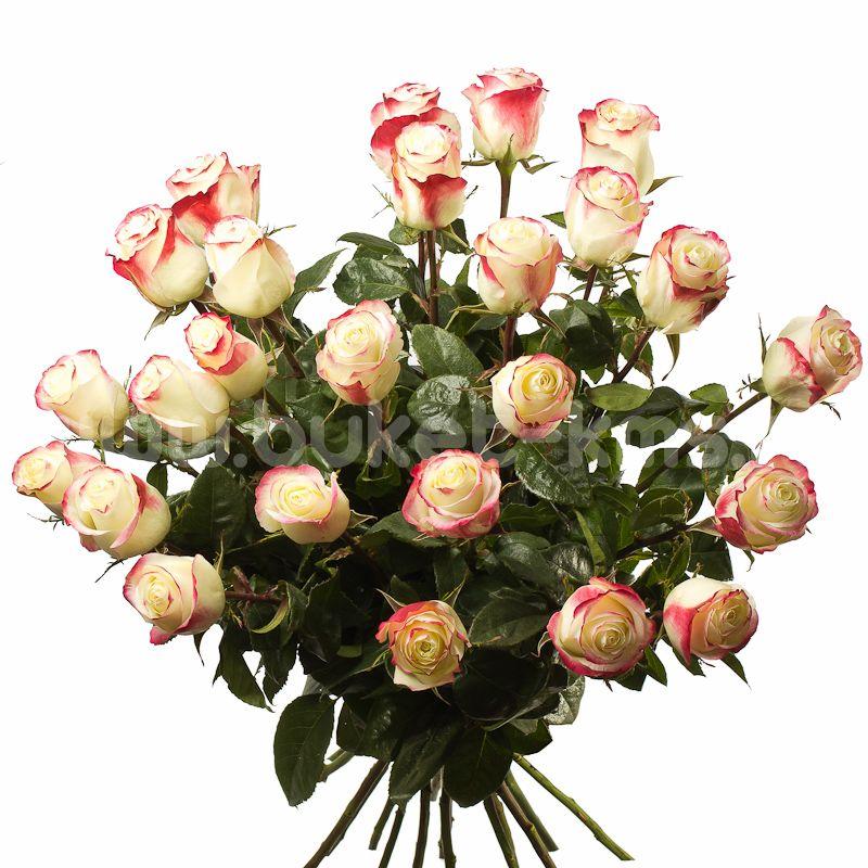 """Букет цветов из 25 роз """"Свитнесс"""""""
